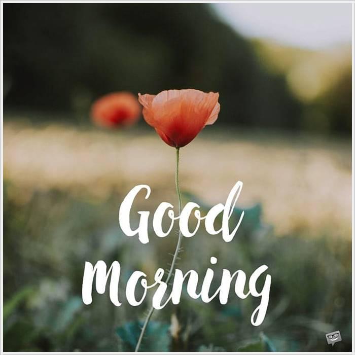 Good Morning Photos Hd Images Beautiful Wallpaper Download